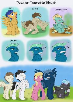 Pegasus Courtship Rituals
