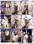 Shining Armor Fursuit