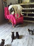 Le chien et les chatons