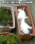 Catnip catnap
