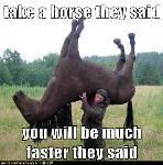 Prends un cheval qu'y disaient, tu iras plus vite.