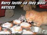 Rats are Bad Influence