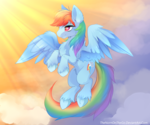 Early Morning: Rainbow Dash