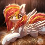 Sunny in the barn 1