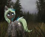 Rainy forest YCH