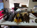 Assorted gryphons