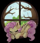 Fluttershy's Window