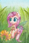 Fairyshy