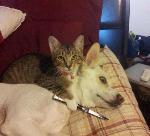 L'amitié chat / chien