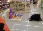 Melloctopus au magasin
