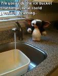 Le Ice Bucket Challenge de trop ?