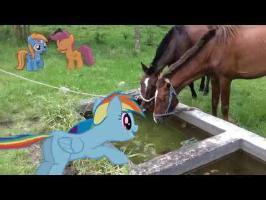 MLP: IRL - Rainbow Dash Drinks with Horses!! XD