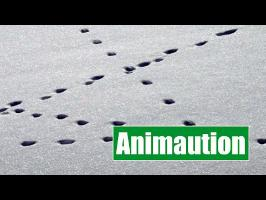 La locomotion terrestre - Animaution