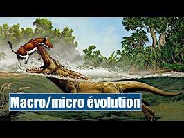 Macro/micro-évolution - IRL