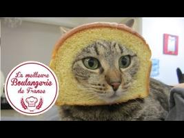 Headshot d'un chat dans La meilleure boulangerie de France (M6)