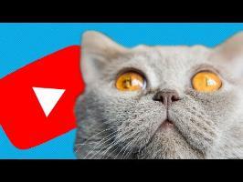 🍅 Pourquoi Youtube nous rend idiots ? Jetons-leur des Tomates Pourries !