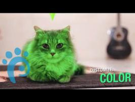 The Sims: Cat Edition (parody)- Video Game Pets | Petcentric
