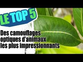 Le top 5 des camouflages optiques d'animaux