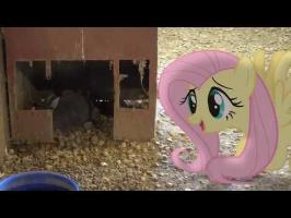Fluttershy Meets a Rabbit ^^