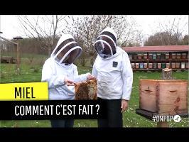 Que trouve-t-on vraiment dans nos pots de miel ?