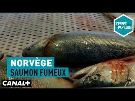 Norvège : Saumon fumeux - L'Effet Papillon – CANAL+ »