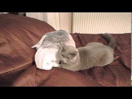 Cat fail - plastic bag