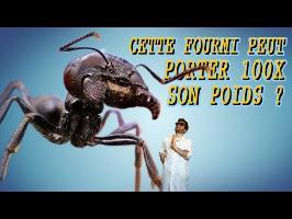 CETTE FOURMI PEUT PORTER 100x SON POIDS ? Vrai ou Faux #19