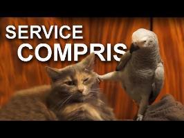 SERVICE COMPRIS - PAROLE DE CHAT