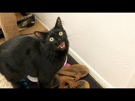Cats with Sound Effects! - Vol. 2