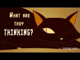 Your Cat Is Talking To You: The Science of Us Episode 4