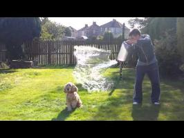Fudge the Dog - Ice Bucket Challenge