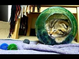 Cutest Cat Moments. Kittens and a Hamster Ball