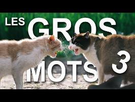 LES GROS MOTS 3 (la revanche du dominé) - PAROLE DE CHAT