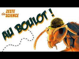 Une fourmilière virtuelle - ZdS#7