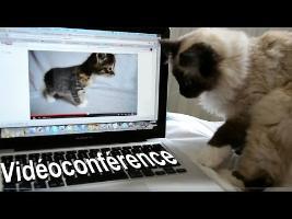 La vidéo conférence