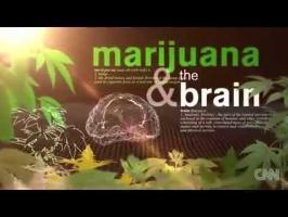 Ceci est votre corps sous cannabis (Dr. CNN)