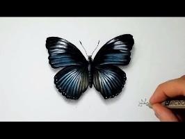 Comment dessiner un Papillon [Tutoriel] 2