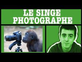 AMoK#19 - Le singe photographe
