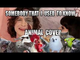 Gotye feat. Kimbra - Somebody That I Used To Know (Animal Cover)