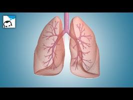4 ou 5 choses que vous ignorez sur la respiration - 32 - e-penser