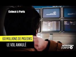 60 millions de Pigeons : le vol annulé