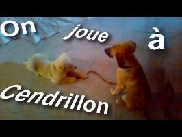 ON JOUE À CENDRILLON ! - PAROLE DE CHIEN