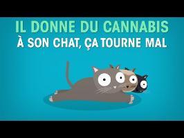 Il donne du cannabis à son chat, ça tourne mal