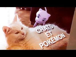 Chats et Pokémon