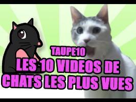 TOP 10 : Les vidéos de chats les plus vues de tous les temps !