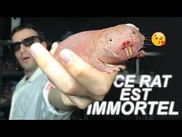 CE RAT EST IMMORTEL ? Vrai ou Faux #73