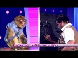 Artus - J'apprends la multiplication à un singe