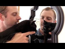 10 Things Most Cat Owners Have Done