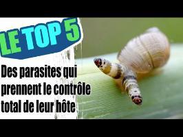Le top 5 des parasites qui prennent le contrôle de l'esprit de leur hôte