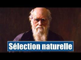 la Sélection Naturelle et l'Homme - IRL